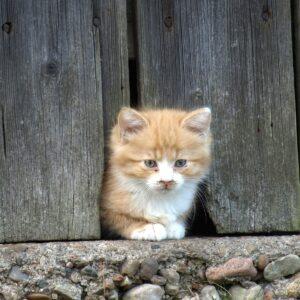 chats de grange